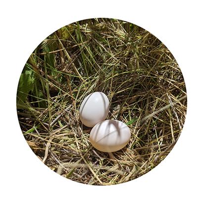 nesting bird eggs